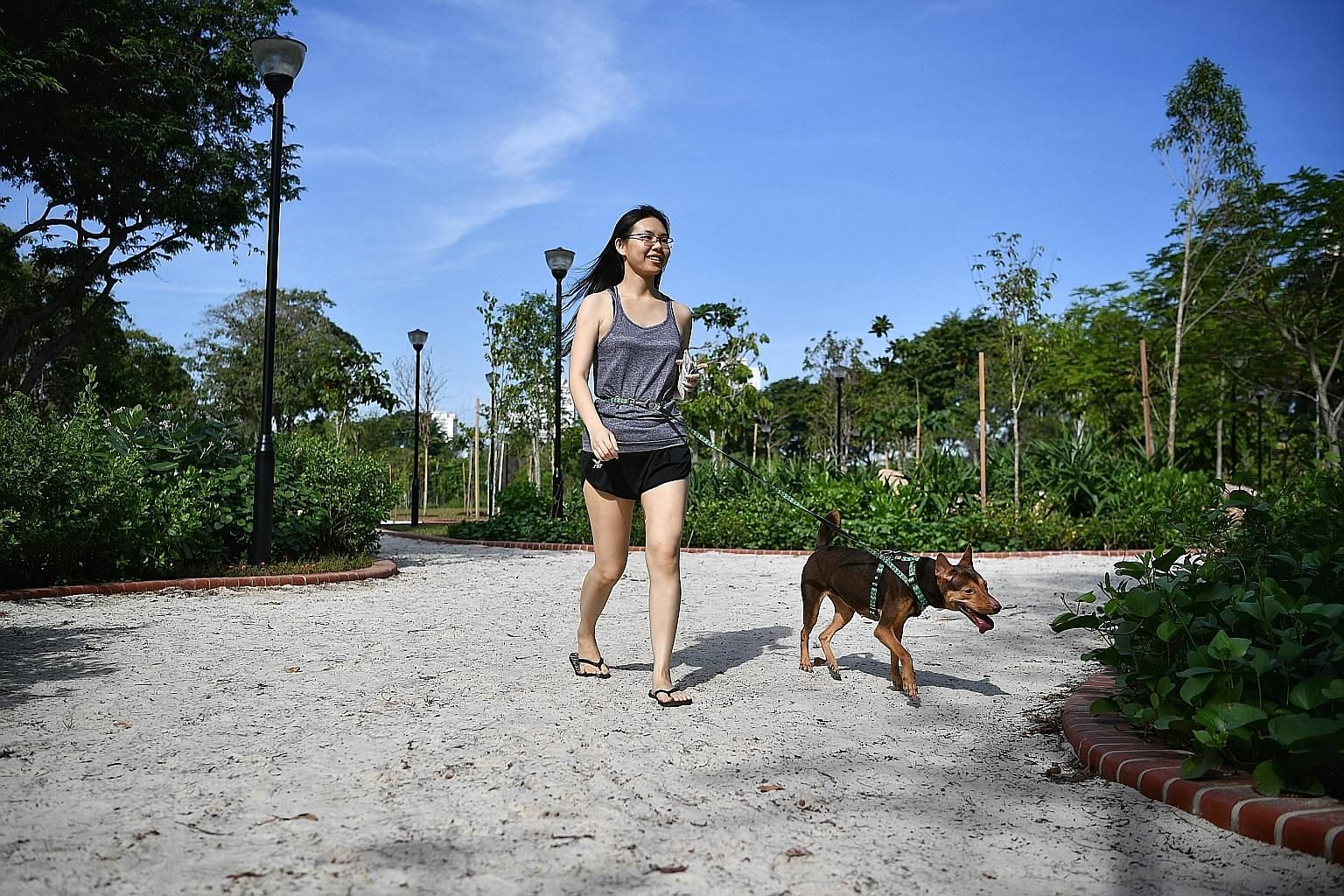Walking one's dog can be a good workout for the owner as well as the pet. The Brandeis University study found that discounting physical exercise, even the least active participants were found to sleep better on some days when they took more steps. ST