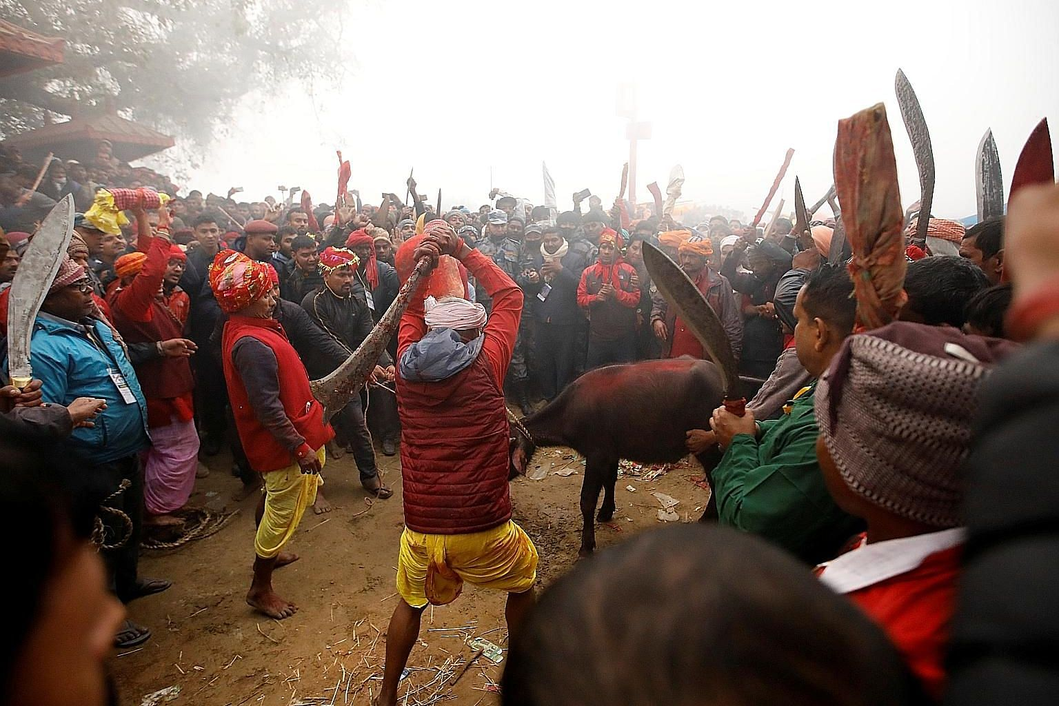 A butcher swinging his blade to sacrifice a buffalo during the Gadhimai Festival held at Bariyarpur in Nepal yesterday. PHOTO: REUTERS