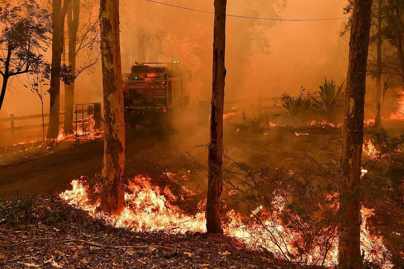 A bush fire raging in Werombi village, some 50km south-west of Sydney, yesterday.