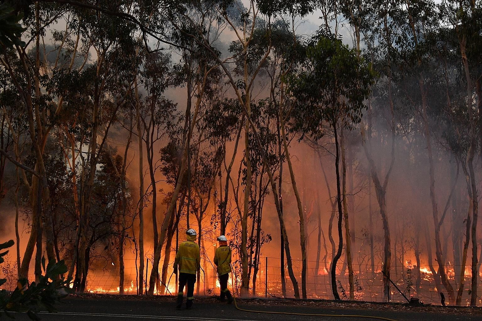 Firefighters trying to protect residential areas from encroaching bush fires in Central Coast, north of Sydney, yesterday. Sydney has experienced record levels of hazardous air pollution from the fires. PHOTO: AGENCE FRANCE-PRESSE
