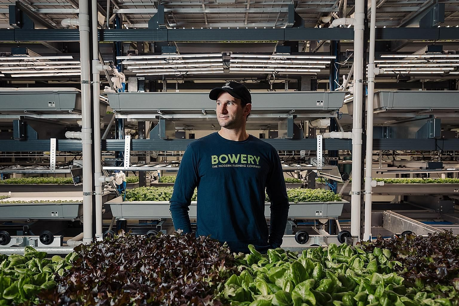 "Bowery Farming chief executive Irving Fain says the firm aims to control the entire farming process ""from seed to store""."