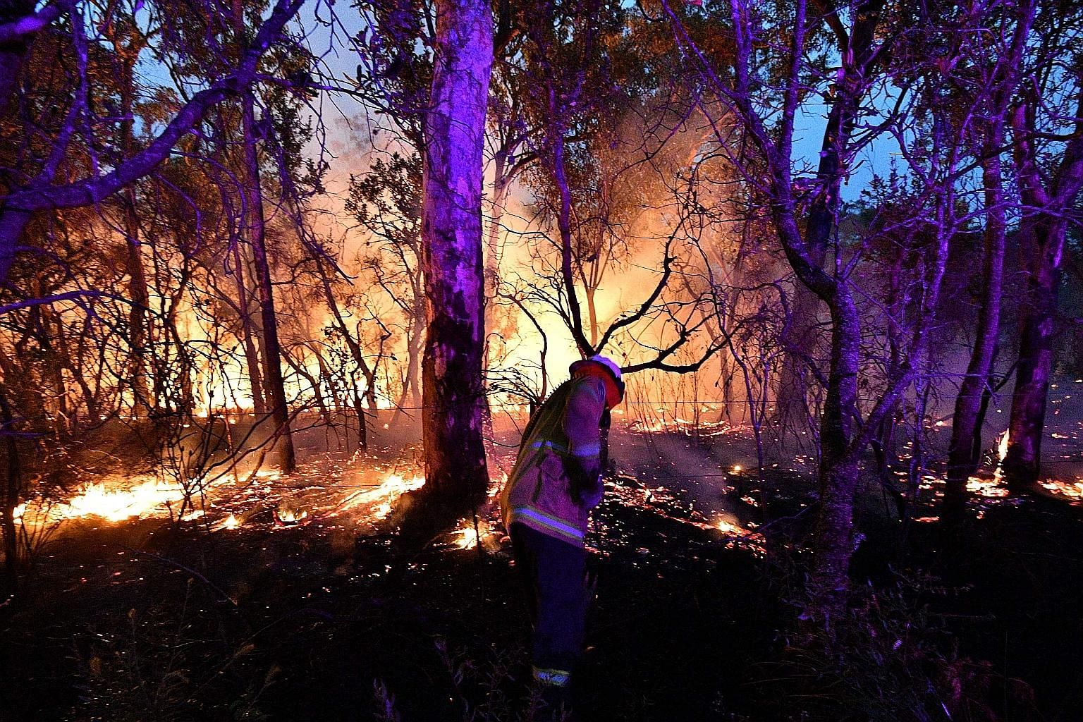 A firefighter conducting backburning on Saturday to secure residential areas from encroaching bush fires about 100km north of Sydney. Bush fires are common in Australia, but scientists say this year's fire season has come earlier and is more extreme,