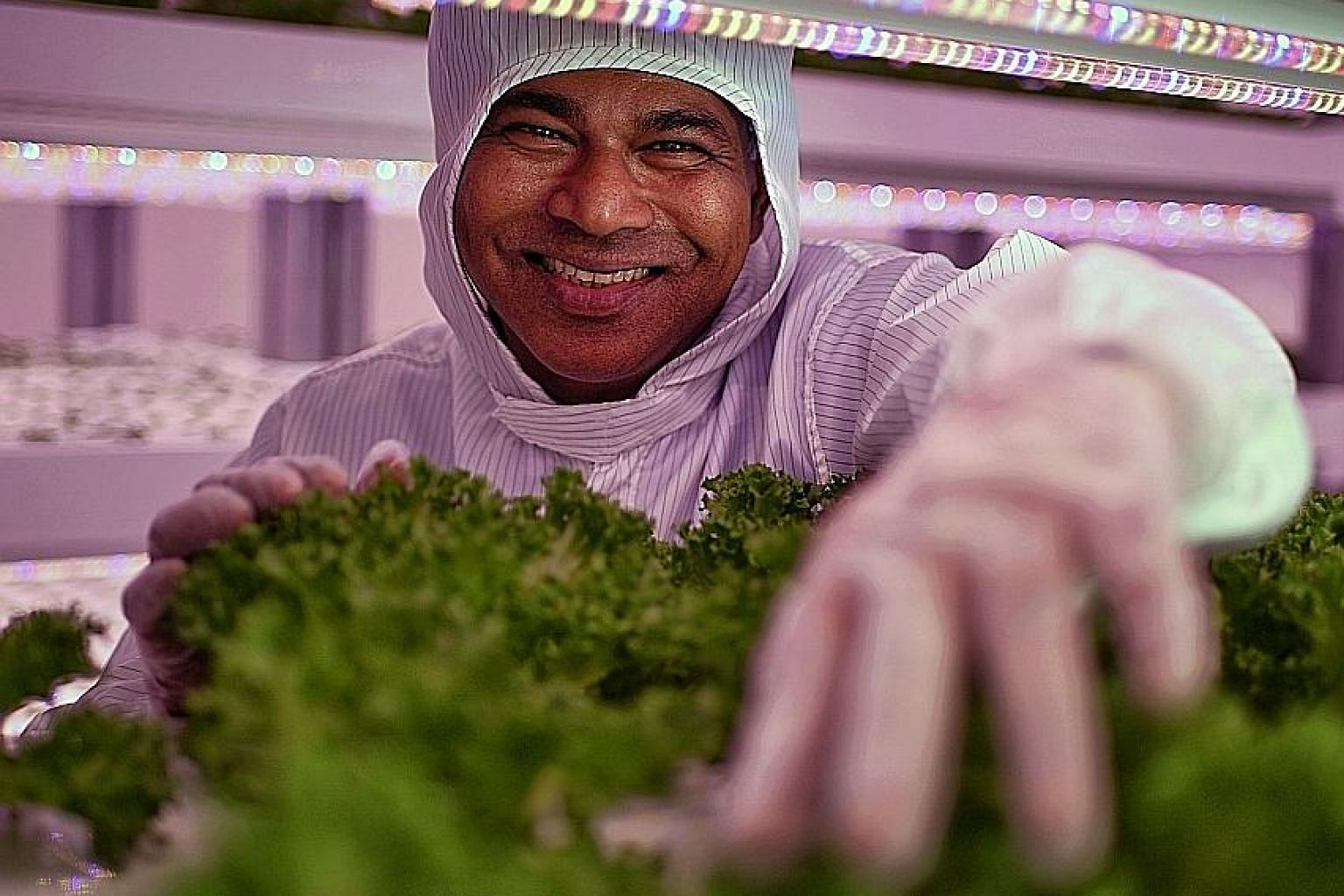 """Mr Veera Sekaran, founder and director of VertiVegies, hopes to take his """"green intelligence"""" - leveraging technology to gather information about plants - outside his farm and to the rest of Singapore."""