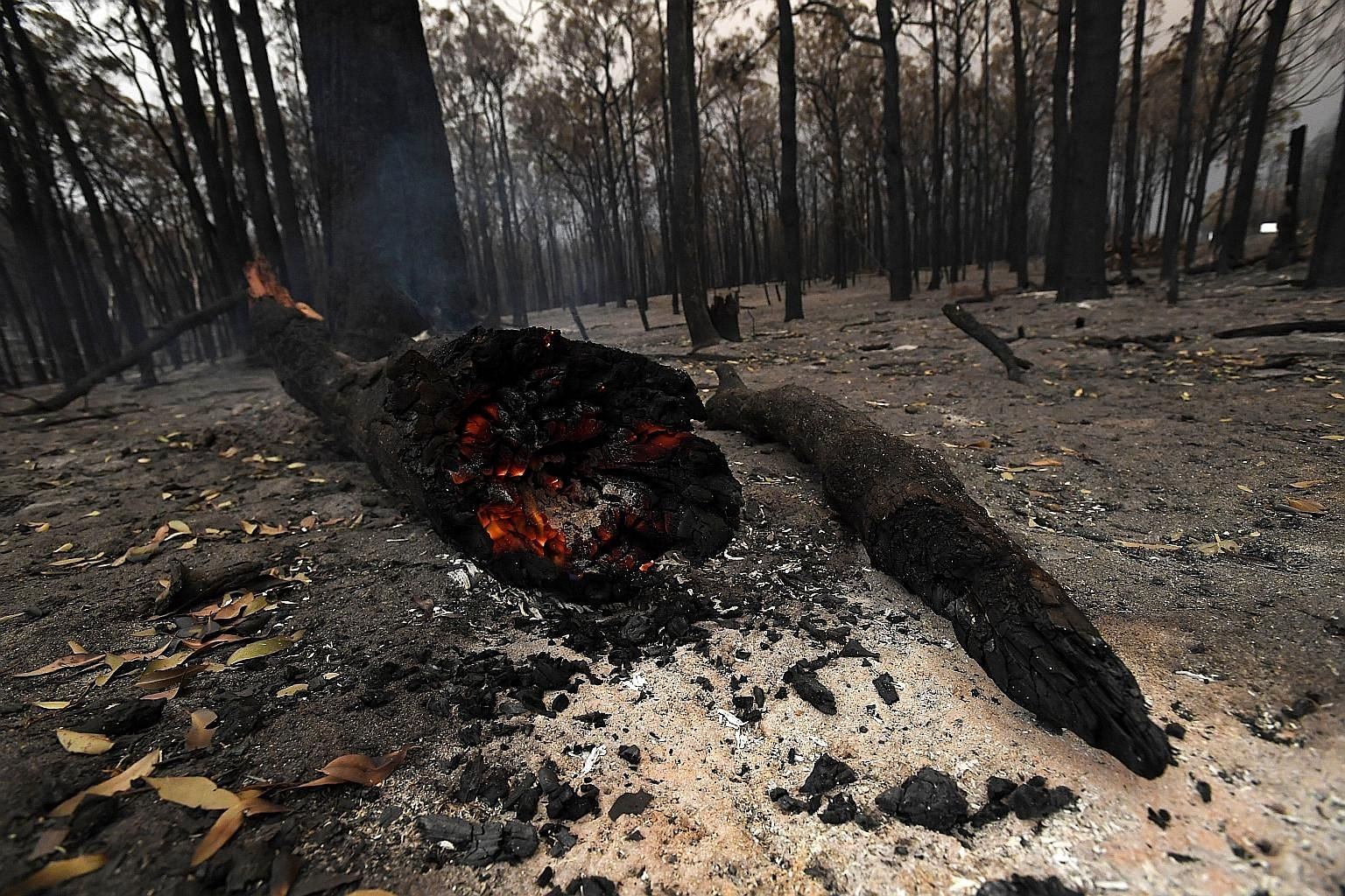 A smouldering tree in Bruthen South, Victoria. The current bush fire crisis has triggered a national call for tougher climate policies and is likely to reshape how and where people live and how fires in Australia will be fought in the future.