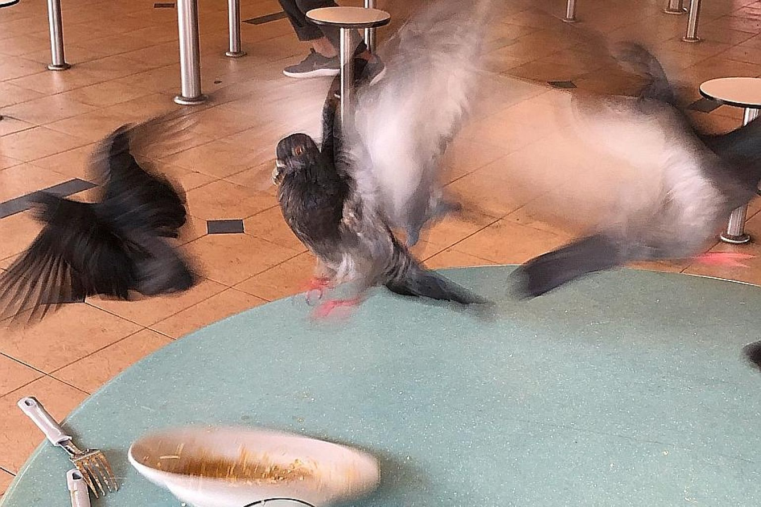 Pigeons homing in on leftovers at Seah Im Food Centre yesterday. ST PHOTO: DESMOND WEE