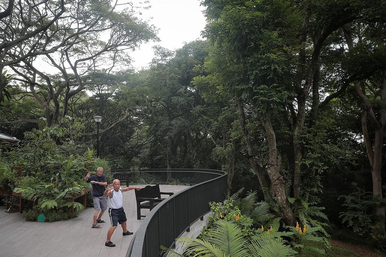 Park users practising taiji at the new therapeutic garden in Telok Blangah Hill Park yesterday. Nestled in the park's natural forest setting, the garden features mature trees and lesser-known forest species with therapeutic effects, such as the Singa