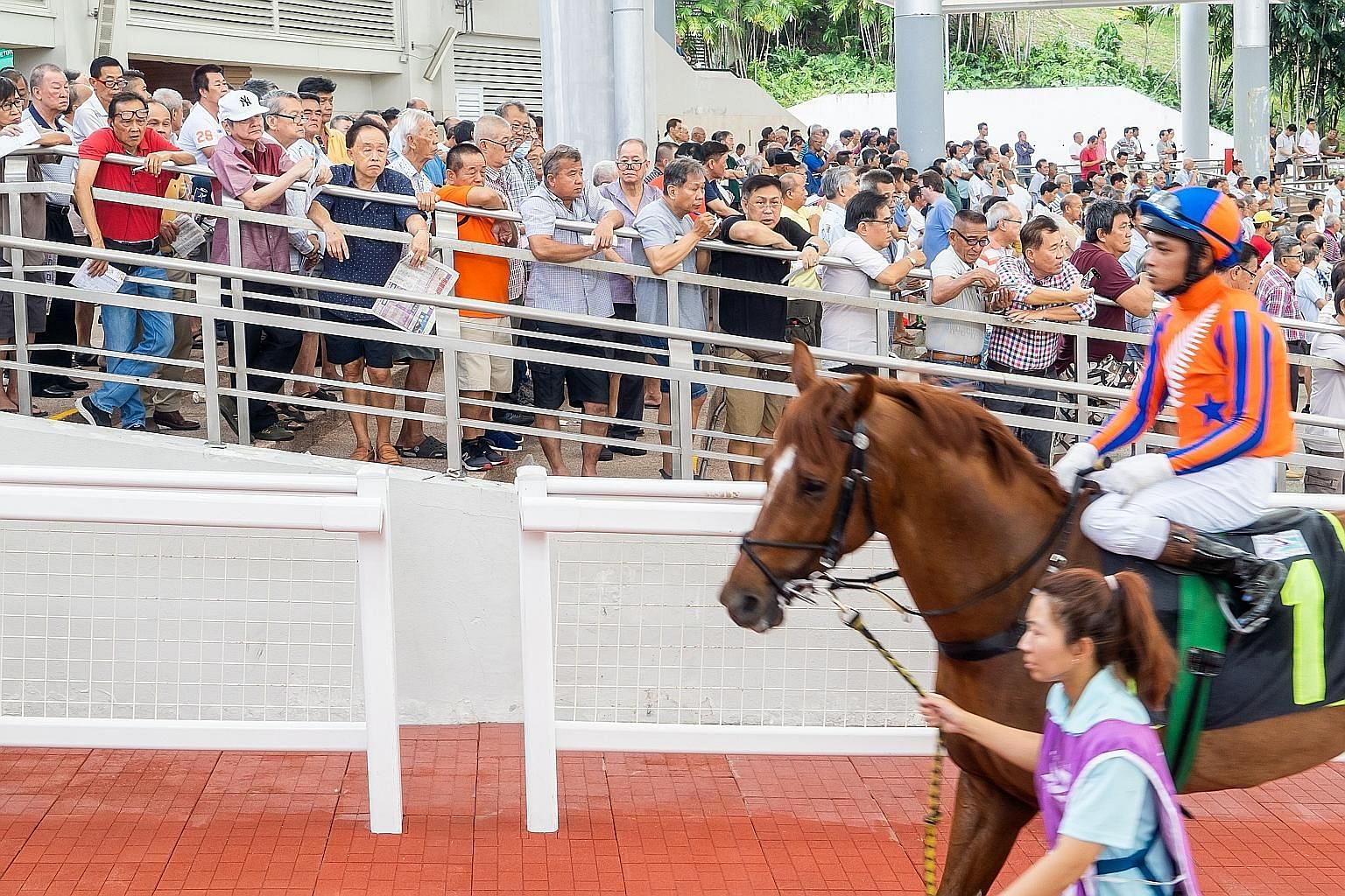 A sizeable crowd seen at the parade ring of the Singapore Turf Club for the races on Sunday. PHOTO: THE NEW PAPER