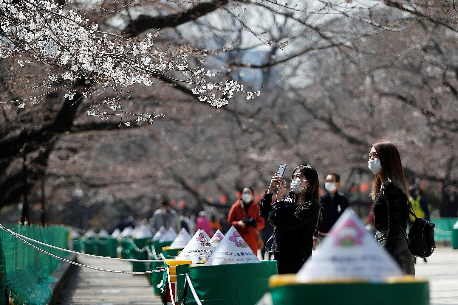 Visitors viewing cherry blossoms next to an area cordoned off, to prevent gatherings, at Ueno Park in Tokyo yesterday. Hanami (cherry blossom viewing) picnics and gatherings are traditionally popular across Japan, although some of the most visited ar
