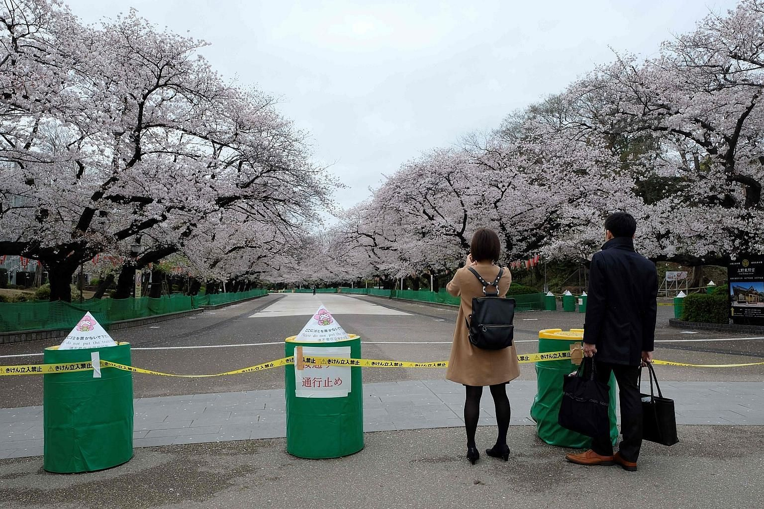 A couple viewing cherry blossoms at Ueno Park in Tokyo yesterday, in front of a road closure sign. Popular cherry blossom viewing sites like Shinjuku Gyoen and Ueno Park have closed or restricted access to the public to discourage outings. PHOTO: AGE