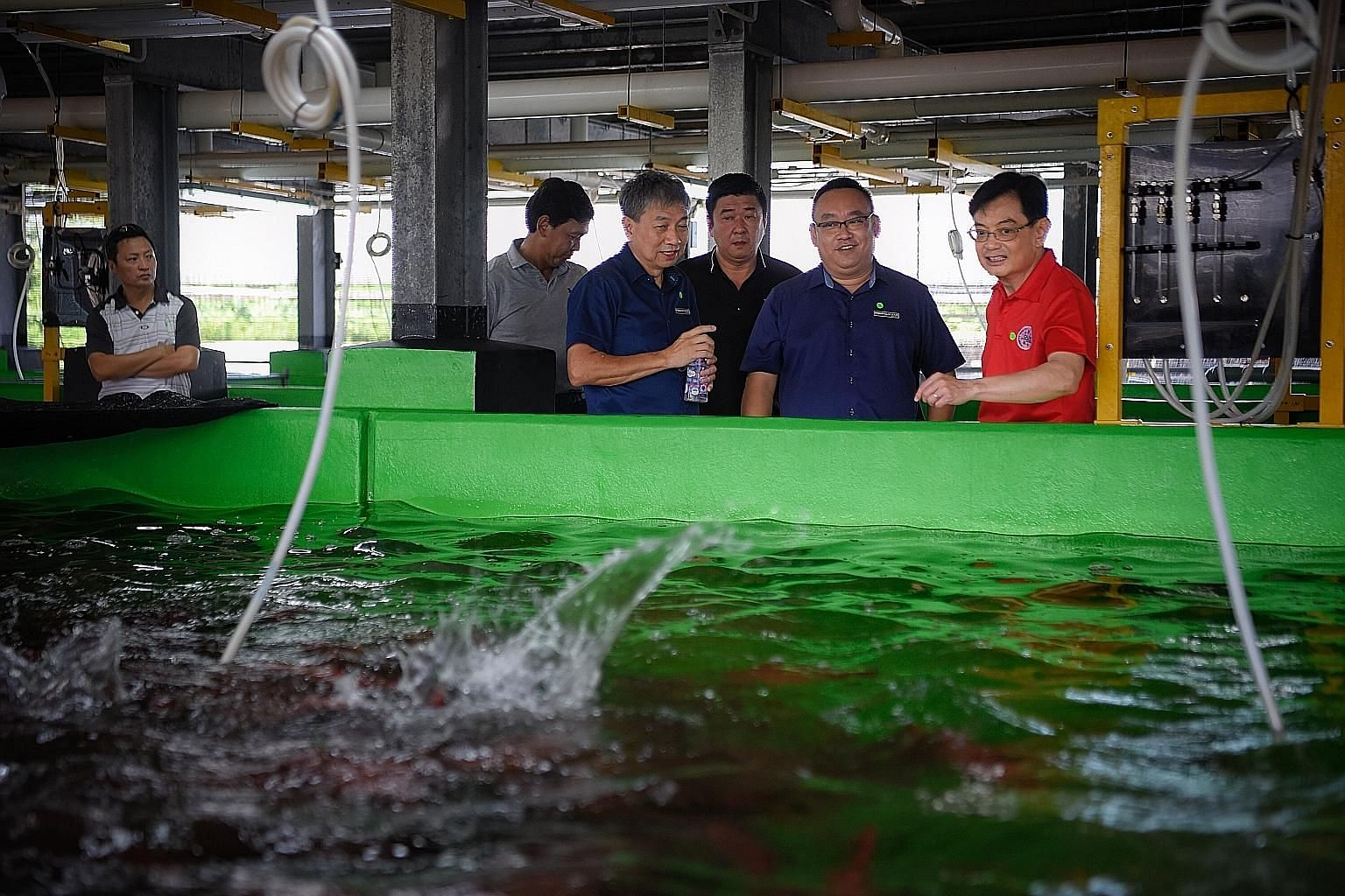Deputy Prime Minister Heng Swee Keat watching coral trout being fed yesterday during a tour of Apollo Aquaculture Group's two-tier vertical fish farm with (from second from left) Singapore Food Agency chief executive Lim Kok Thai, Apollo Aquaculture