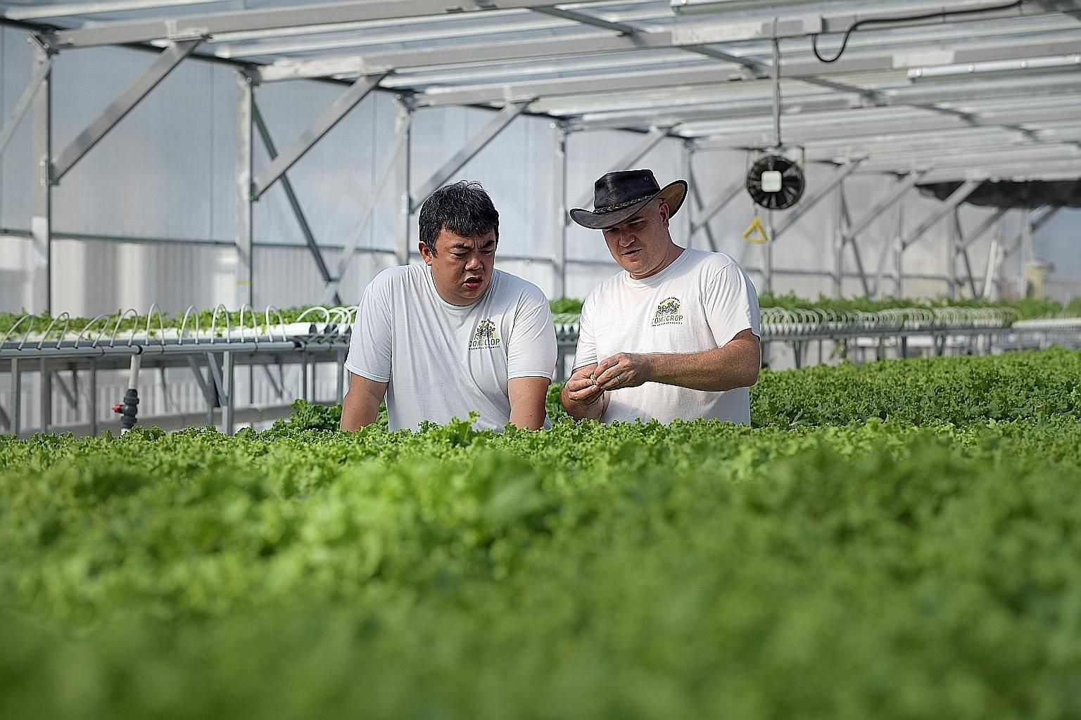 ComCrop founder Allan Lim and chief executive Peter Barber at the company's rooftop greenhouse in Woodlands.