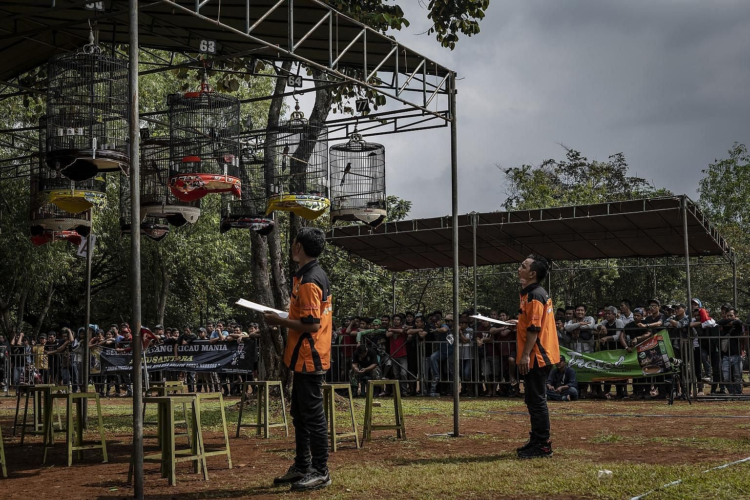 Judges listening to birds at the South Jakarta Police Chief's Cup, a bird-singing competition that was held in Jakarta, Indonesia on Jan 26. Wild songbirds are being entered into high-stakes singing competitions across Indonesia and conservationists