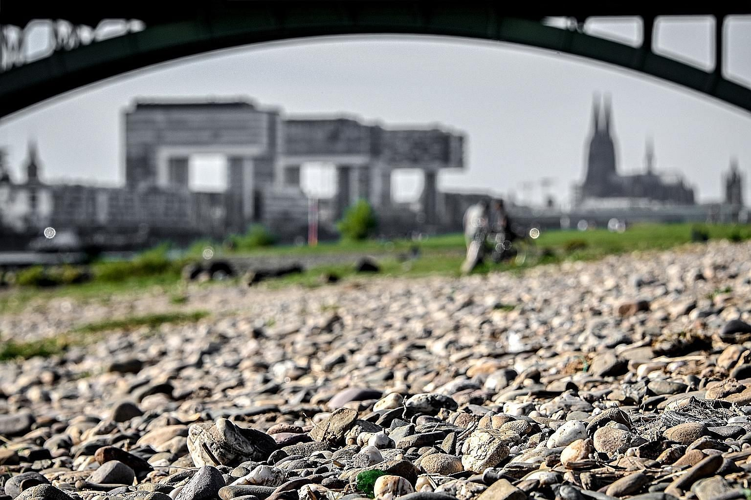A dried-up riverbed of the Rhine in Cologne, Germany. In addition to yellowing vegetation, the dry spell has depressed water levels in the Rhine River, a conduit for barges delivering everything from steel to oil and coal to Germany's factories.