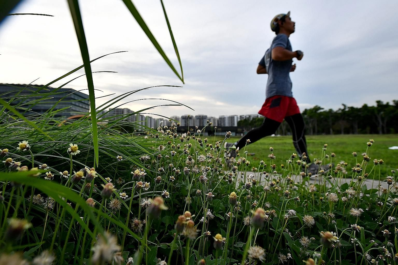 Weeds and wildflowers are growing across the island after the cutting of grass was scaled back during the circuit breaker period. But while some people welcome the proliferation of weeds, saying it could also lead to more wild bees and butterflies, o