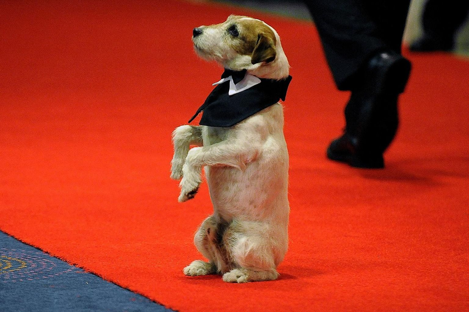 A 2012 file photo of Uggie, who won the canine version of the Cannes festival's top prize, the Palme d'Or.
