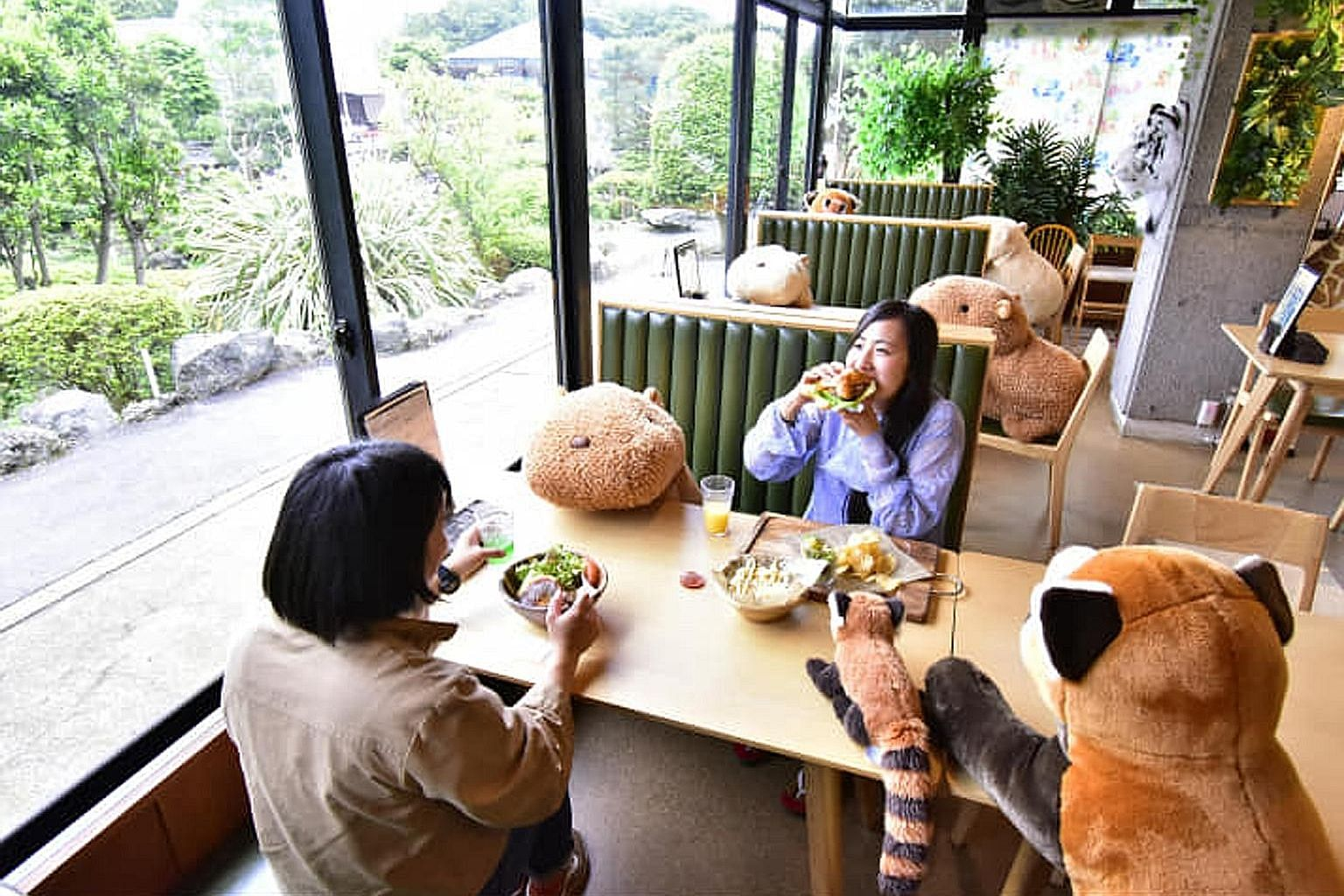 Izu Shaboten Zoo in Shizuoka, Japan, has turned to adorable stuffed animals for a fun way to observe safe distancing. The stuffed animals dining at the restaurant include red pandas and giraffes. The layout of the restaurant has also been adjusted to keep