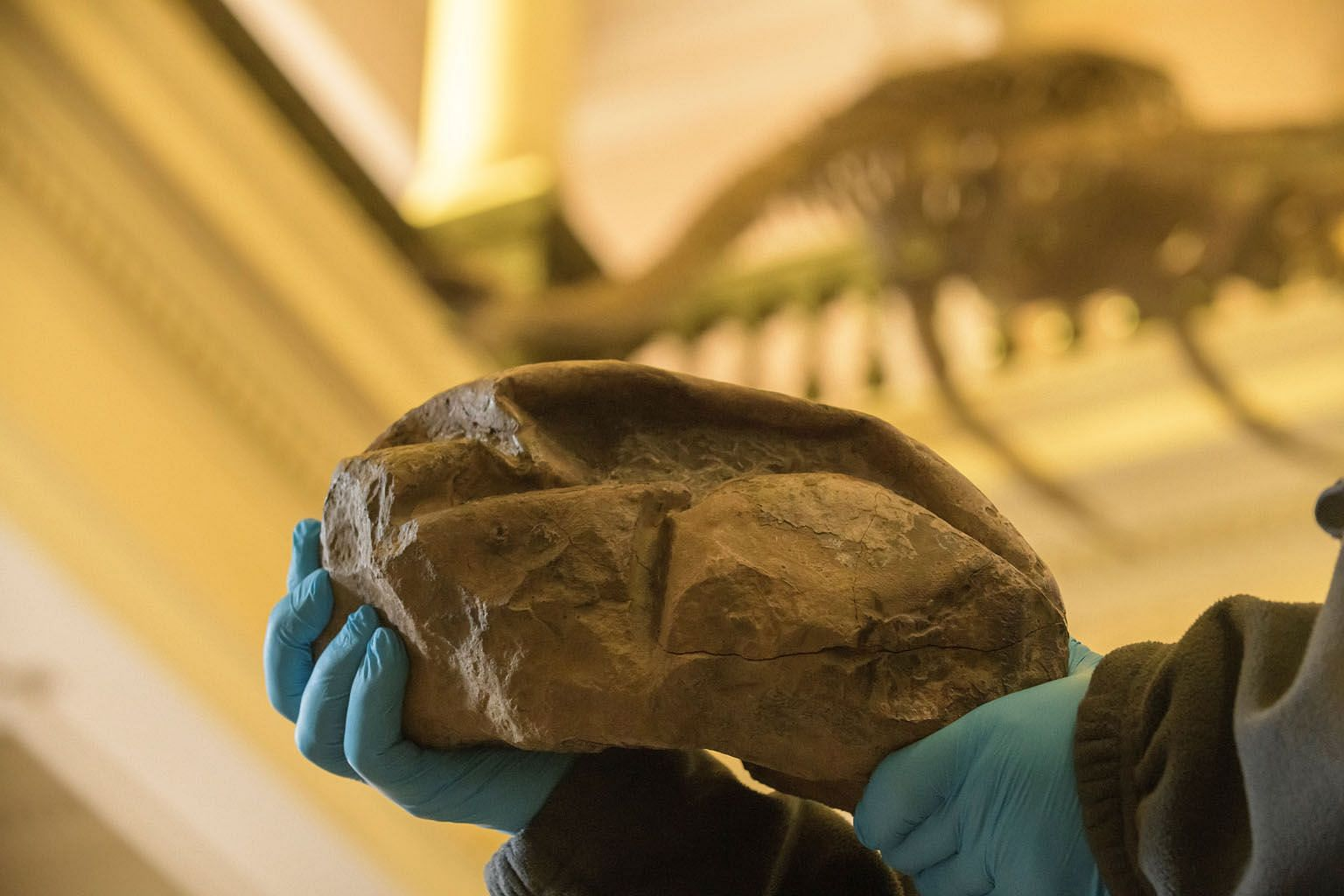 The 29cm by 20cm fossilised egg, which had been found on Seymour Island off Antarctica in 2011, is thought to have been laid by a mosasaur or a plesiosaur - marine reptiles that went extinct at the same time as the dinosaurs, after an asteroid struck