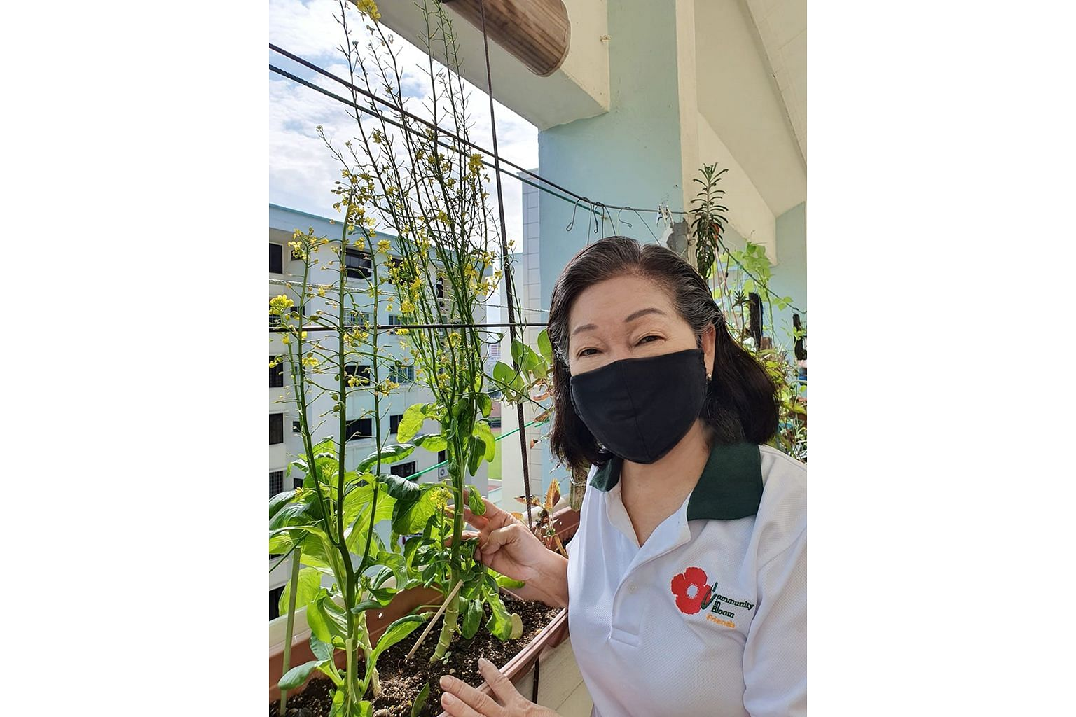 Community in Bloom ambassador Iris Ho (left) grows vegetables and fruit such as Chinese spinach and cucumber along the corridor of her Ang Mo Kio Housing Board flat, while Ms Loh Lay Kwan, vice-president for sustainable operations at DBS Bank, has a tomat