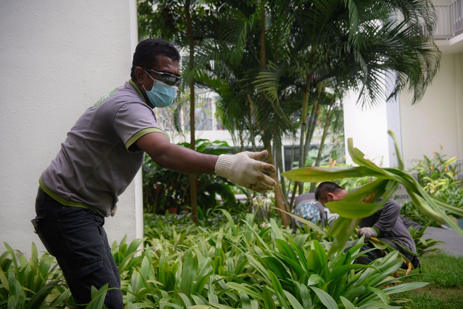 Singaporean Rosli Latiff, 57, who works for Nature Landscapes, continues to help as a site supervisor for one of the horticultural firm's clients in the Dairy Farm area, despite half his team being out of action. The clearance process for workers has held