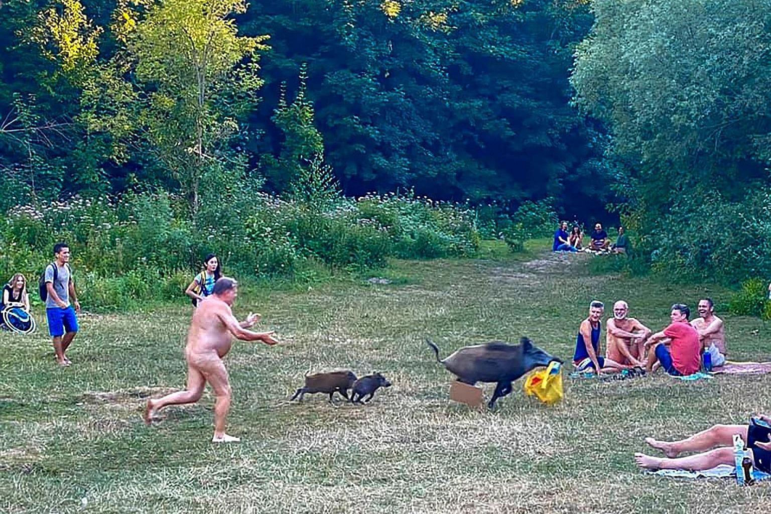 The man chasing the boar, which ran off with a bag containing his laptop while he was sunbathing at Teufelssee lake in Berlin.