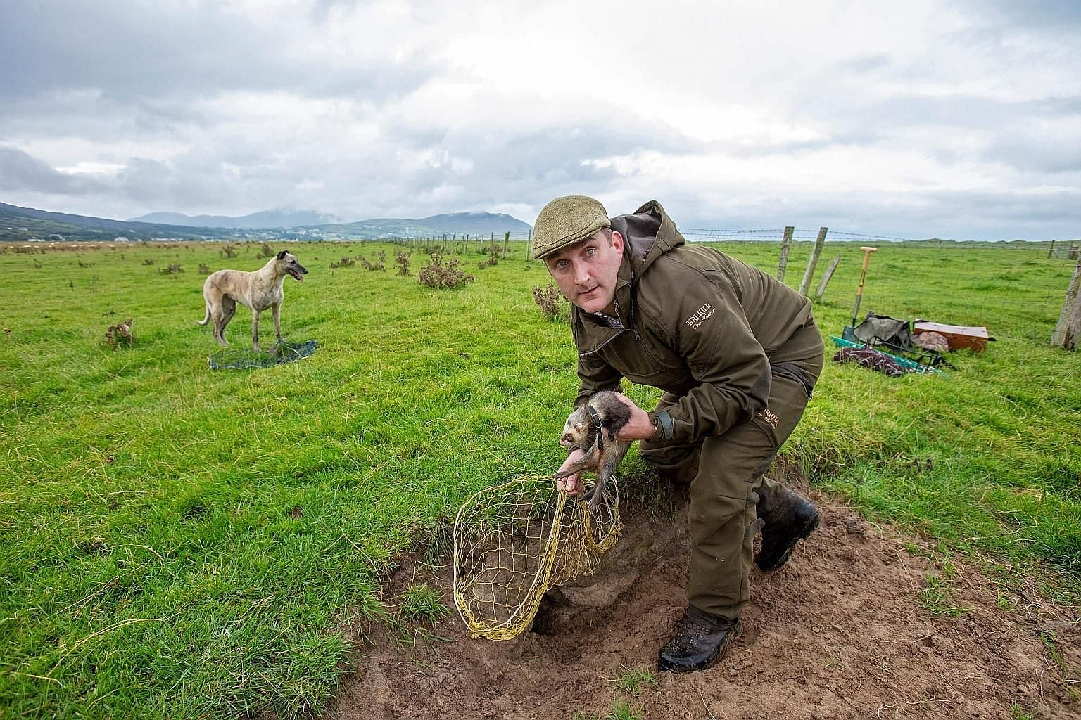 Professional rabbit catcher Steven McGonigal, holding a ferret and, with his dog Fudge, sets a net as he hunts for rabbits in County Donegal, north-west Ireland. He prefers using ferrets, dogs, spades and nets over modern guns and poison.