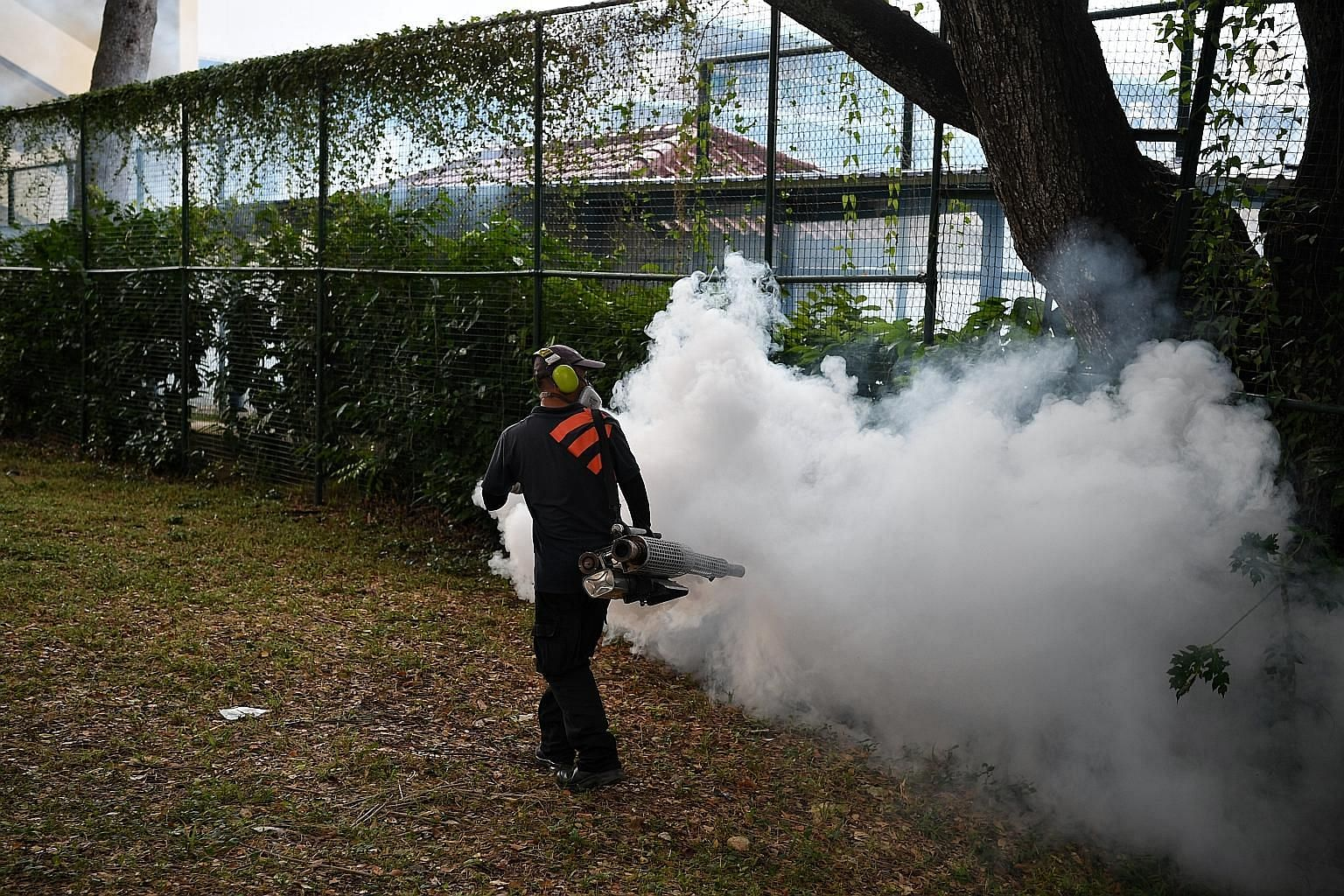 Fumigation is one of the measures taken against dengue. Others include intensive enforcement and inspection regimes, which involved 107,000 inspections of homes, as well as the destruction of about 5,300 mosquito breeding habitats in May and June alo