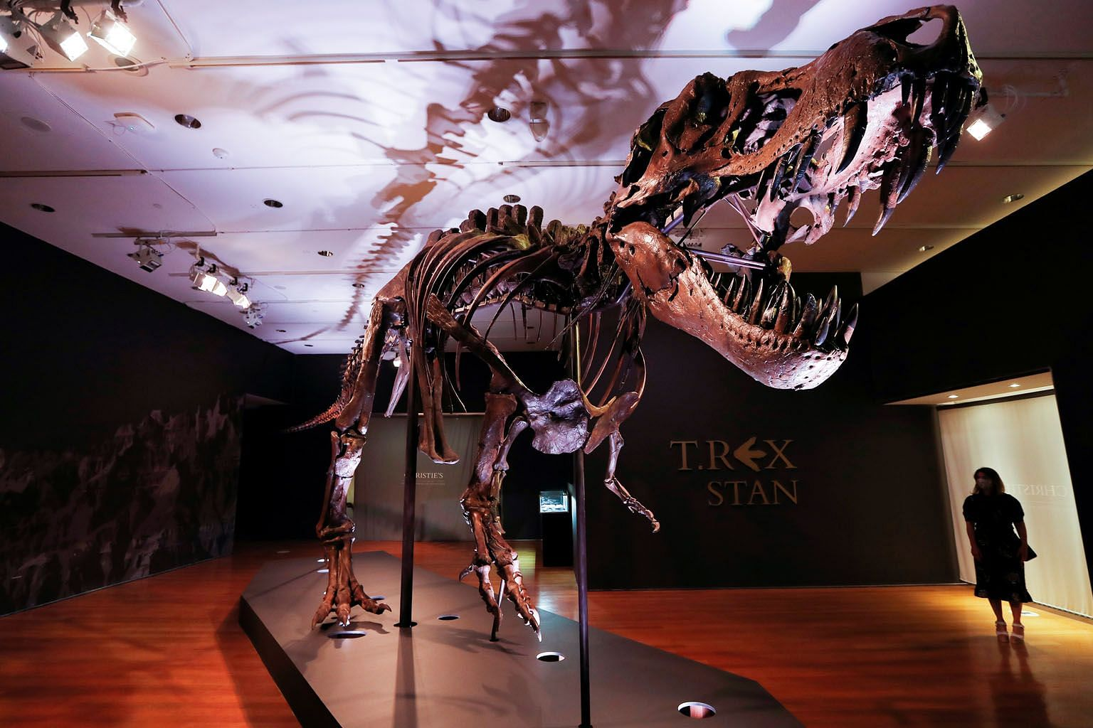 T-Rex Stan, the 12m dinosaur that researchers estimate died 60 million years ago at the age of about 20, on display ahead of its public auction at Christie's in New York City. The 188-bone skeleton is named after Mr Stan Sacrison, the amateur palaeon