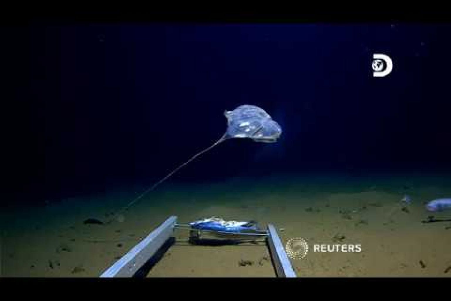 Researchers 'speechless' at mystery deep ocean creature