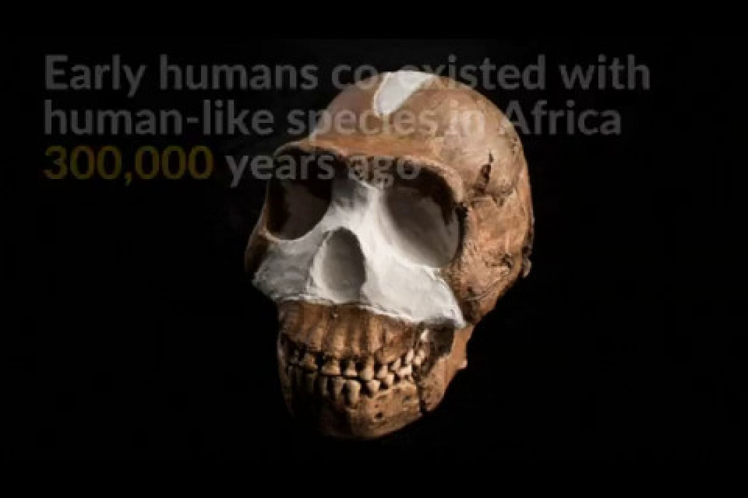 Early humans co-existed with human-like species 300,000 years ago in Africa