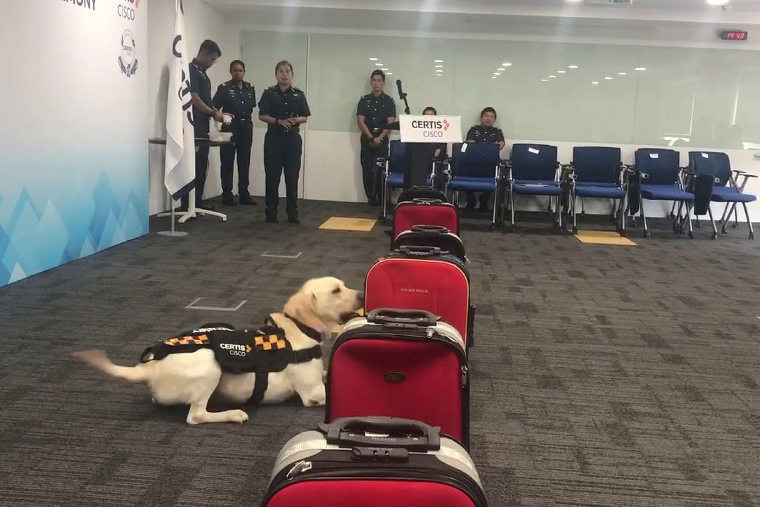 Sniffer dog Naomi identifies a luggage with planted explosive materials, during a simulated exercise