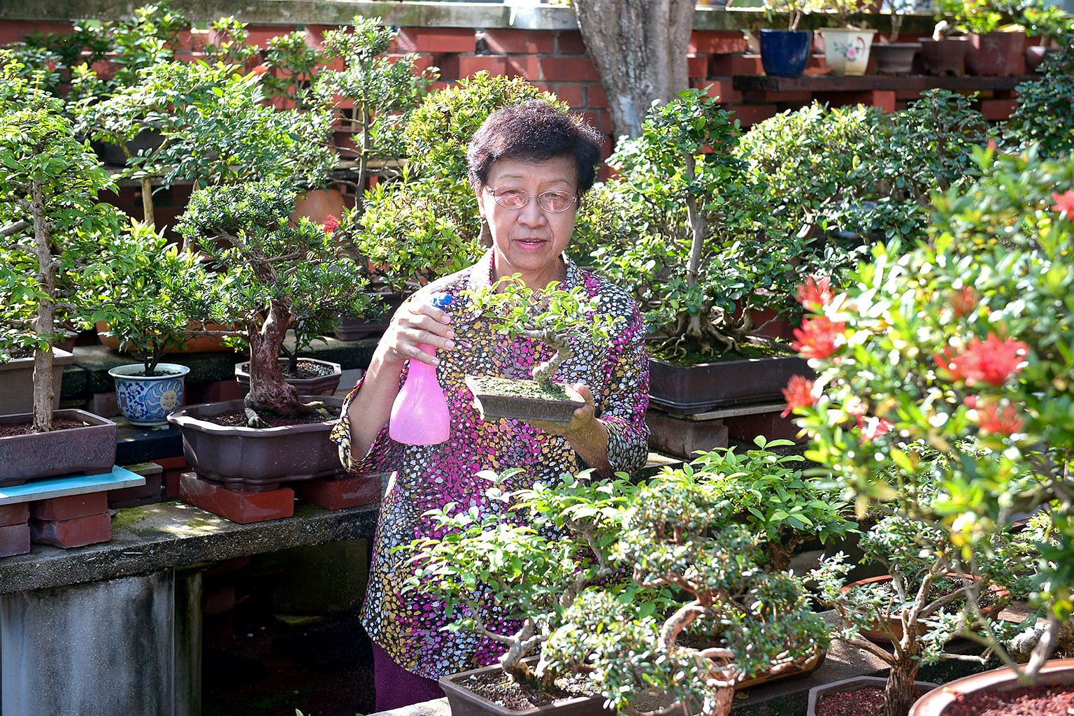 Singapore Penjing & Stone Appreciation Society president Chua Hoon (above) has more than 300 bonsai in her home.
