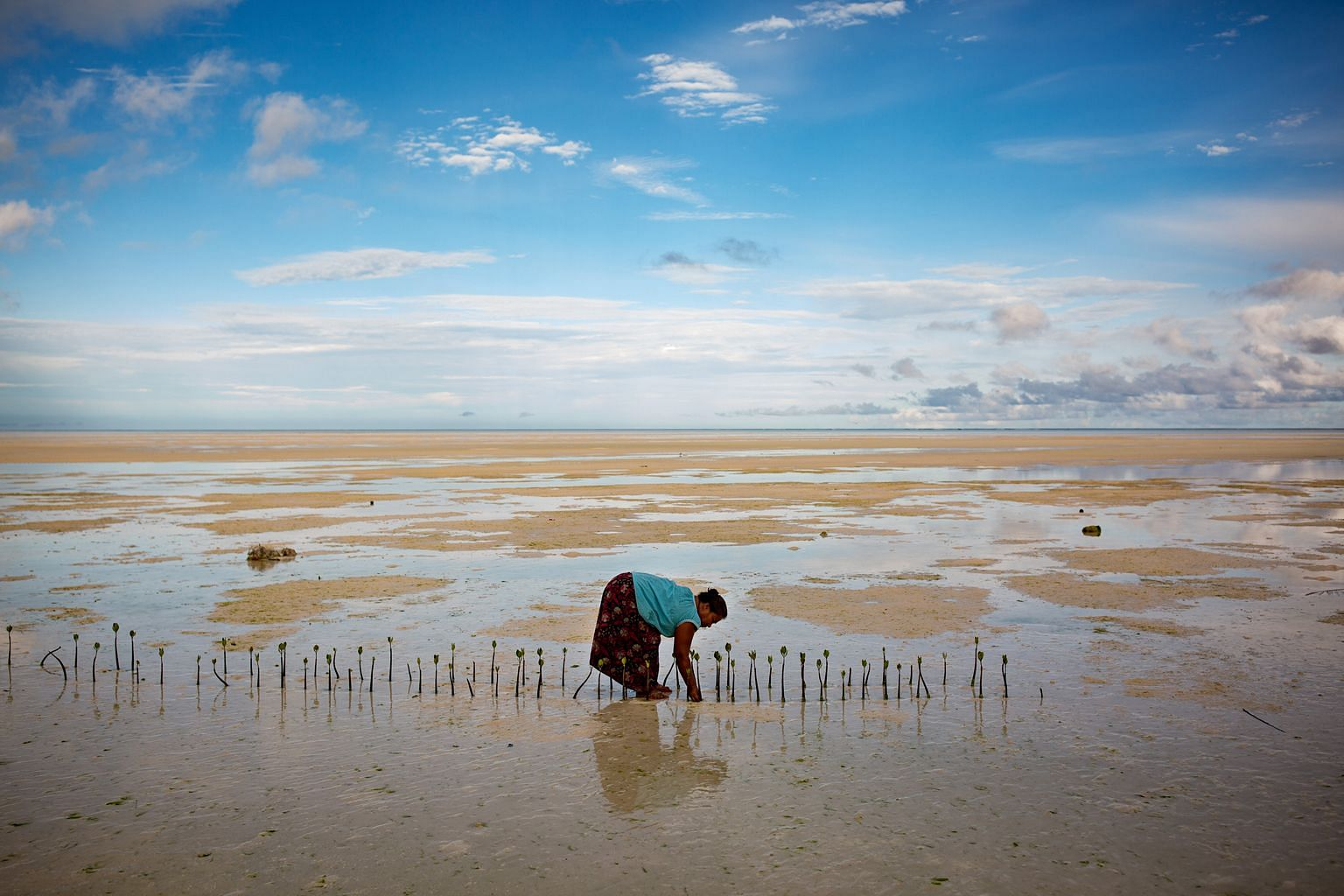A villager tending to month-old mangrove trees that she planted to slow erosion in North Tarawa, Kiribati. Pacific island nations are among the world's most physically and economically vulnerable to climate change. Pastor Tean Rube of the Kiribati Un