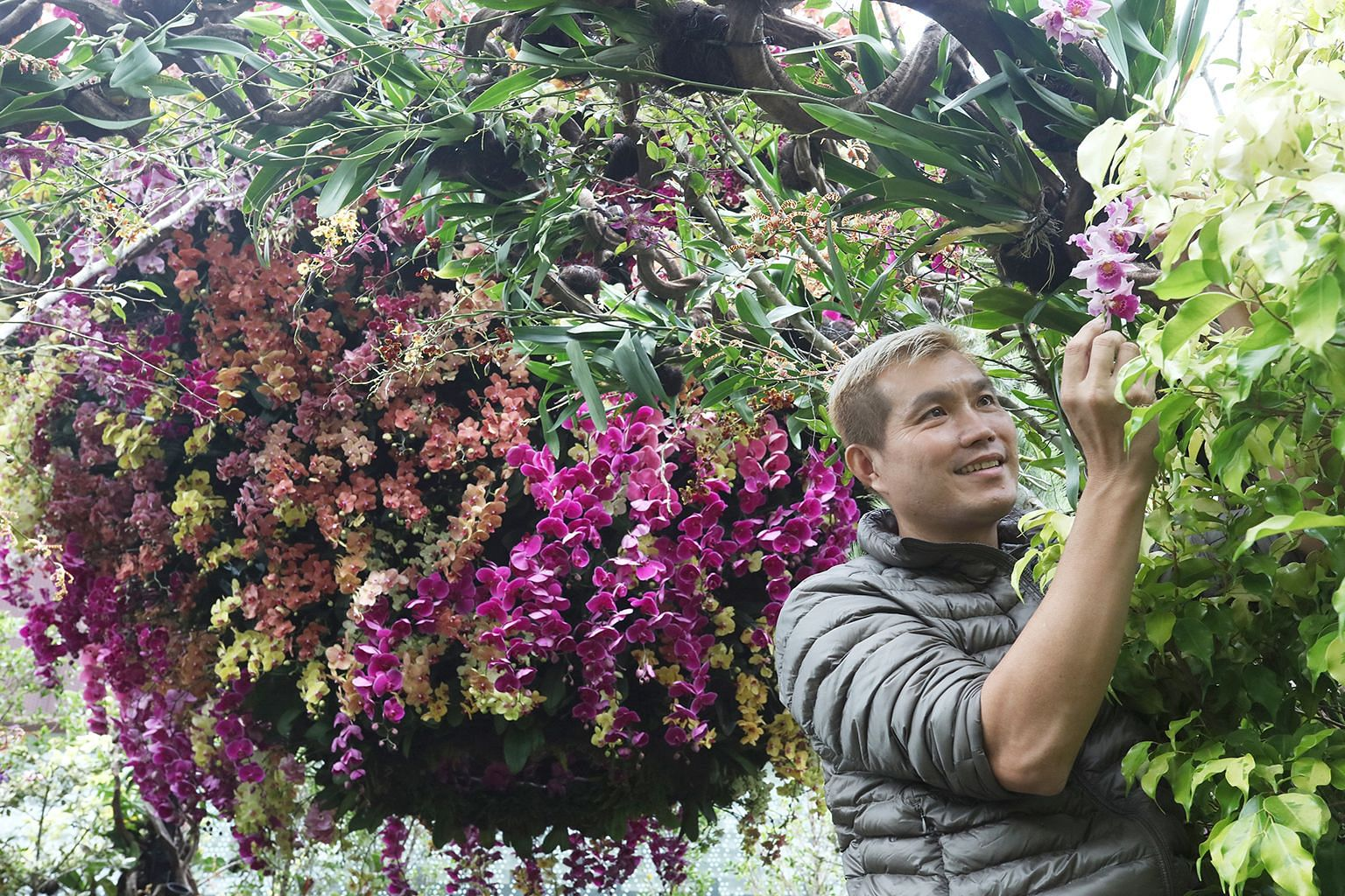 """The Tulip Orchid (above) from South America has a lip that rocks back and forth like a cradle as well as lemon or golden yellow blooms. Singaporean garden landscape designer Alan Tan (left) with the """"Sacred Forest"""" spiral structure at the Orchid Extr"""
