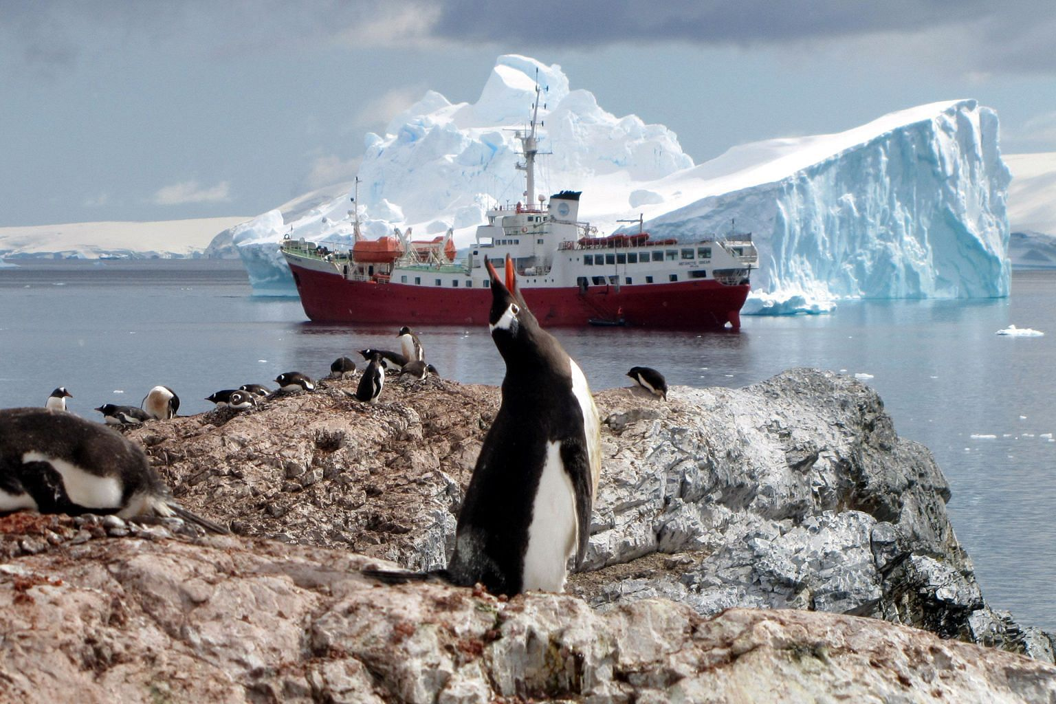Penguins in Antarctica, where human encroachment continues, even as a massive and growing crack in one of the region's fourth- largest ice sheets threatens the region's stability and an entire ecosystem.