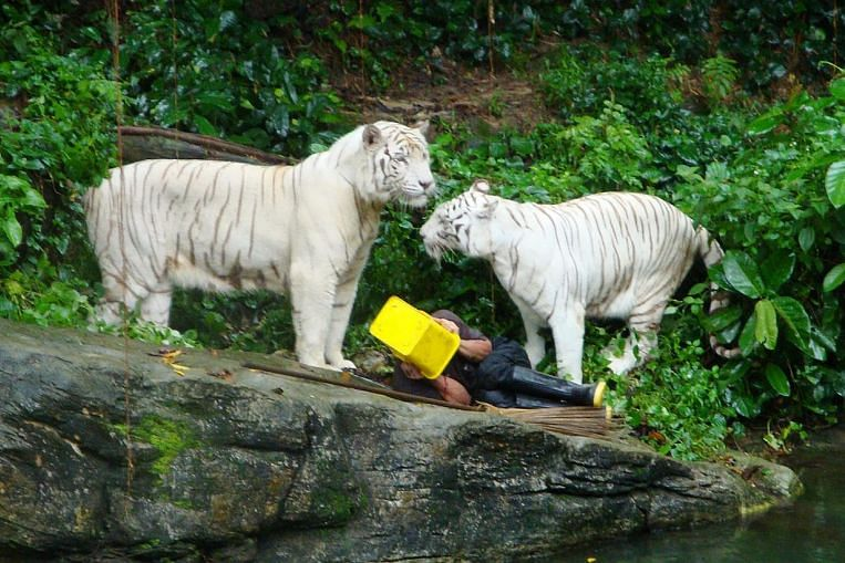 the death of winnie the white tiger 5 things to know