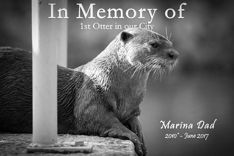 Father of family of otters at Singapore River dies; poisoning suspected, Singapore News & Top ...