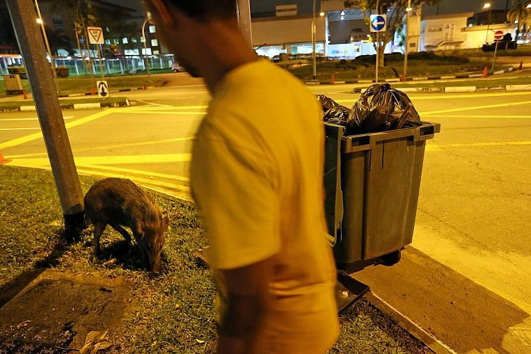 Singapore, jungle city: Can humans and wild animals co-exist?