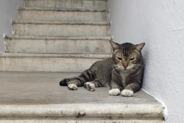 Tiong Bahru residents band together to care for stray cat