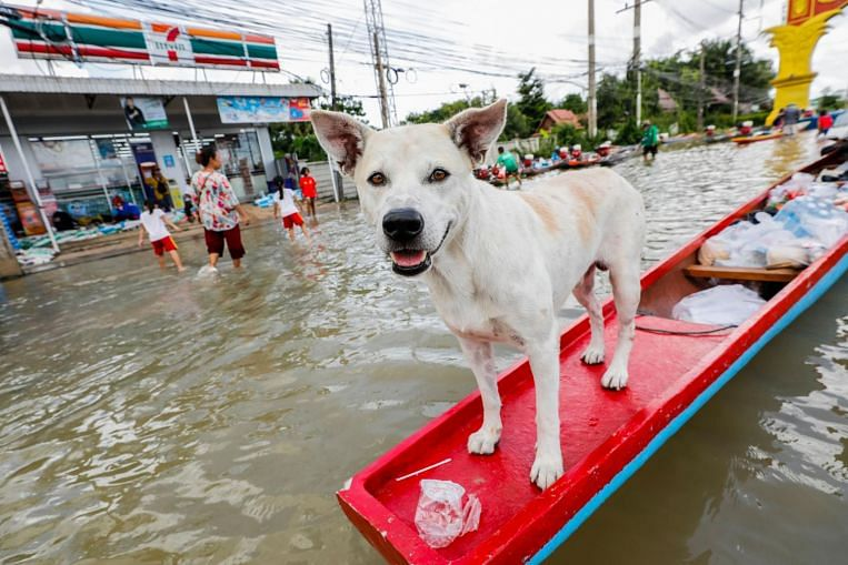 Thailand's north-east submerged in floodwater as high as 4 metres, 33 dead