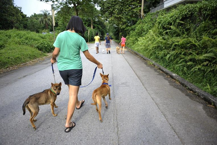 Your fur babies can't wear an N95 mask, so how can you protect your pet from the haze?