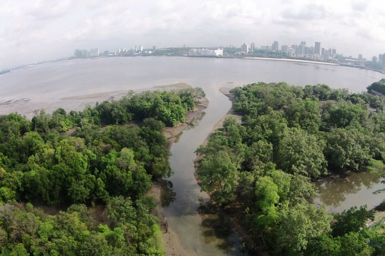 Singapore will incorporate nature-based solutions that go beyond coastal protection: Masagos