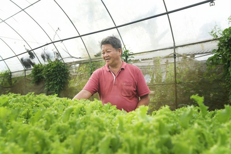 Merdeka Generation: Former TCM physician goes from healing hands to green fingers