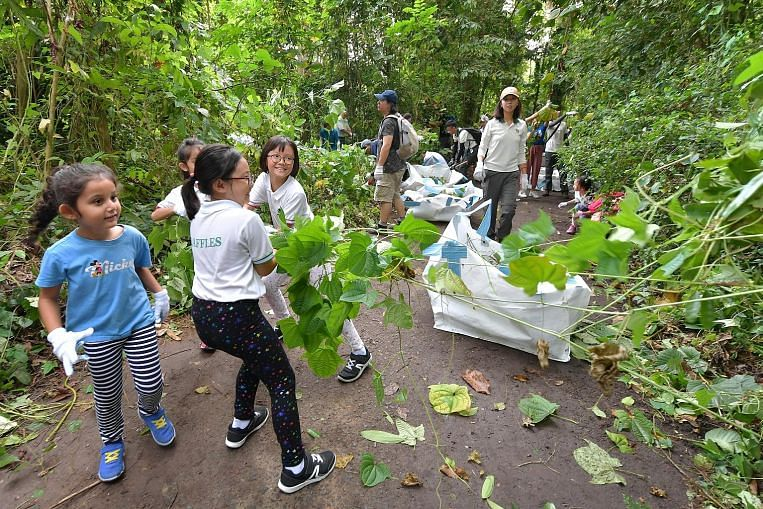 Volunteers help weed out Batman plant in Bukit Timah forest