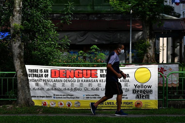 Huge dengue outbreak expected this year; more than 8,000 infected and 12 dead so far