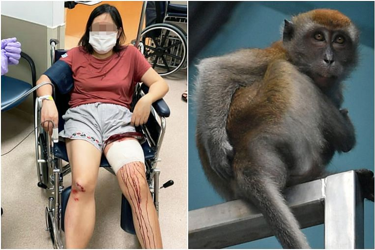 From wild boars to macaques, 4 attacks and other incidents related to feeding Singapore's wildlife thumbnail