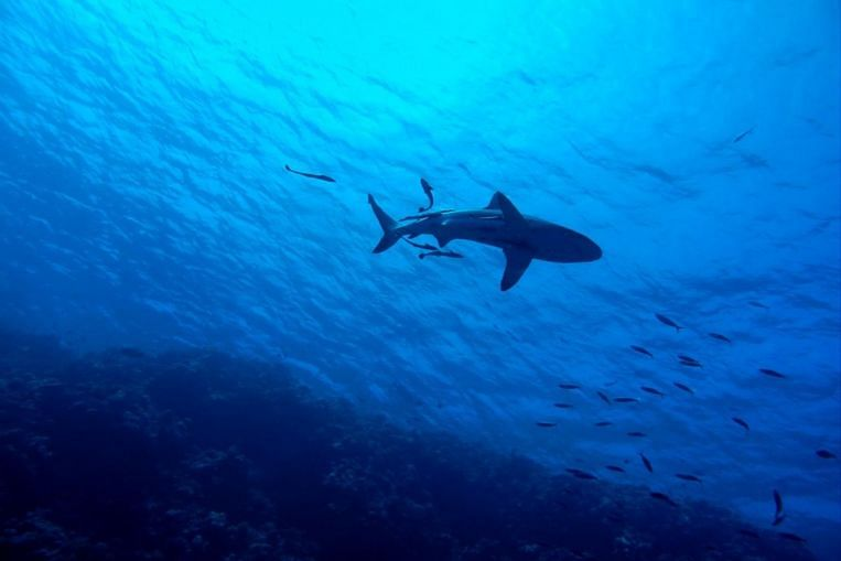 Surfing doctor finds simple life-saving shark bite treatment