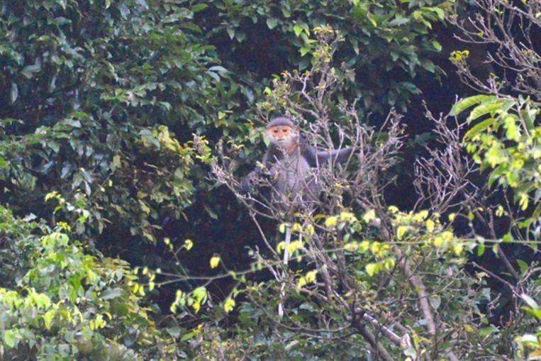 Lima monyet terancam mati ditembak mati di Vietnam, SE Asia News & Top Stories