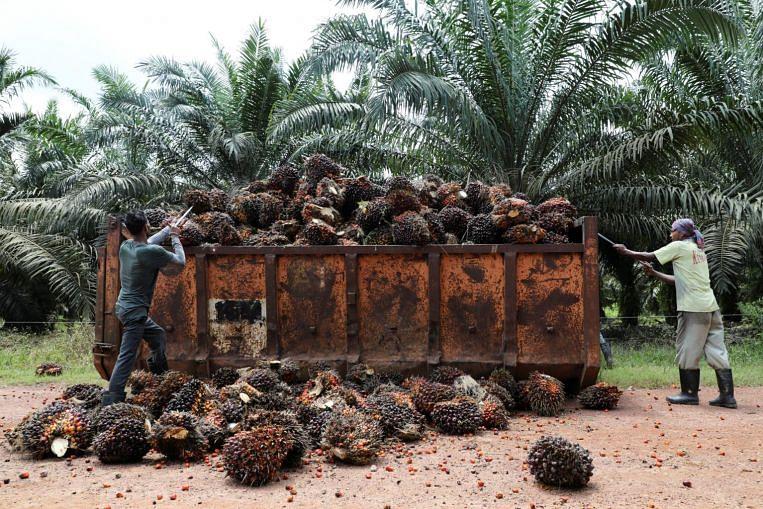 Minyak makan yang paling banyak digunakan di dunia juga menghadapi masalah bekalan, Berita Ekonomi & Cerita Teratas