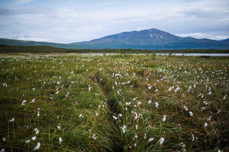 Mencairkan permafrost yang melepaskan stor karbon terkunci lama adalah bom jangka yang berdetik, Berita Dunia & Cerita Teratas