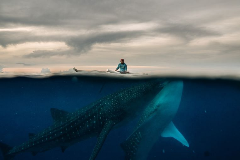 Dari dekat dengan jerung paus, Berita Foto & Cerita Teratas